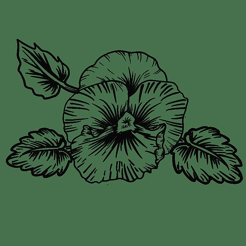 手绘-勾线花朵植物元素贴纸-牵牛花