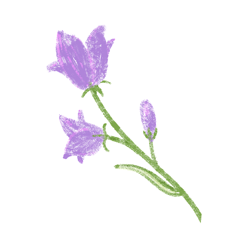 手绘-氛围花朵贴纸3-牵牛花