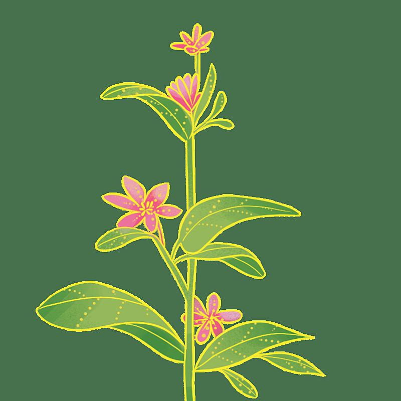 中国风-国潮植物元素贴纸