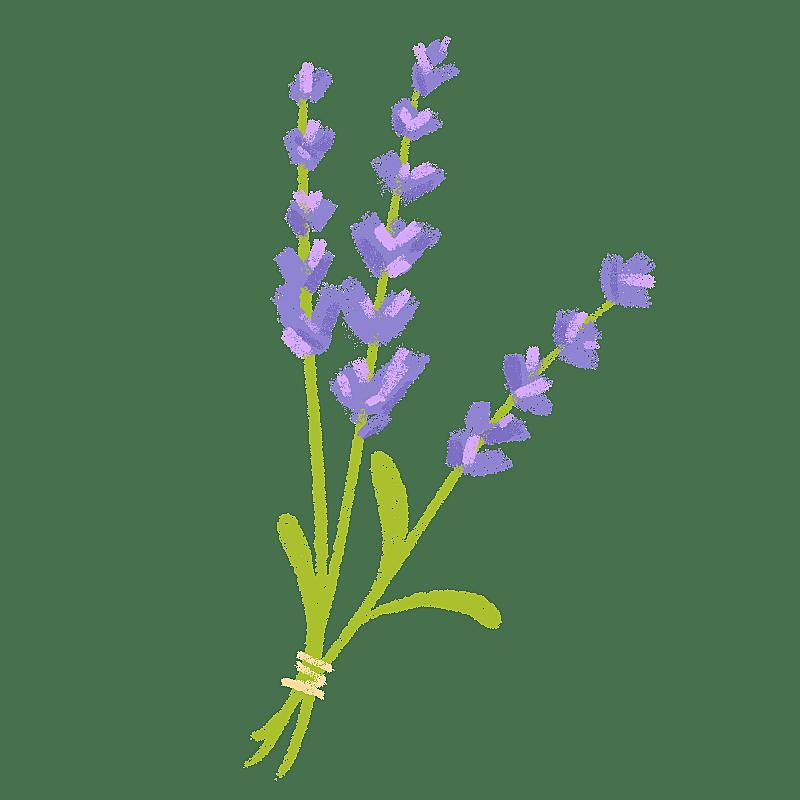 手绘-氛围花朵贴纸3-薰衣草