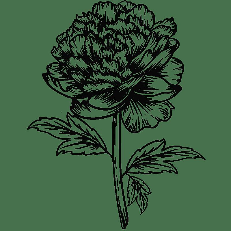 手绘-勾线花朵植物元素贴纸-牡丹花