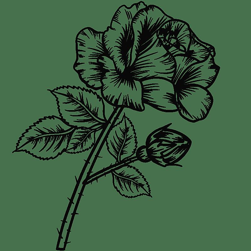 手绘-勾线花朵植物元素贴纸-玫瑰花
