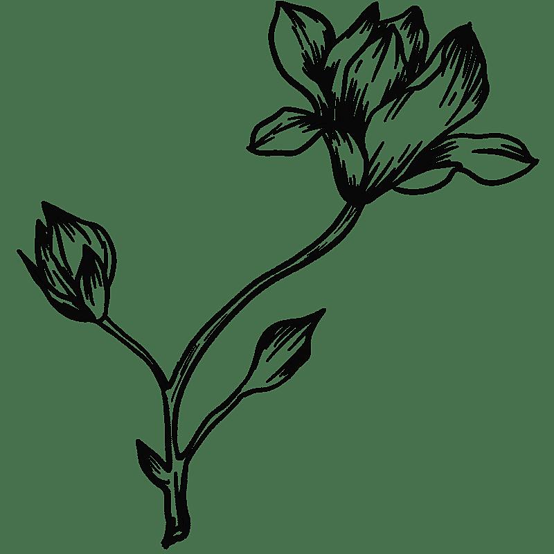 手绘-勾线花朵植物元素贴纸-木兰花