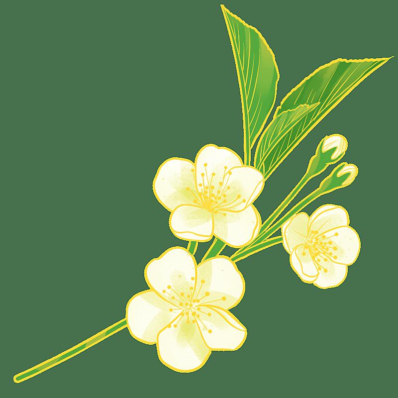 中国风-国潮植物元素贴纸-梨花