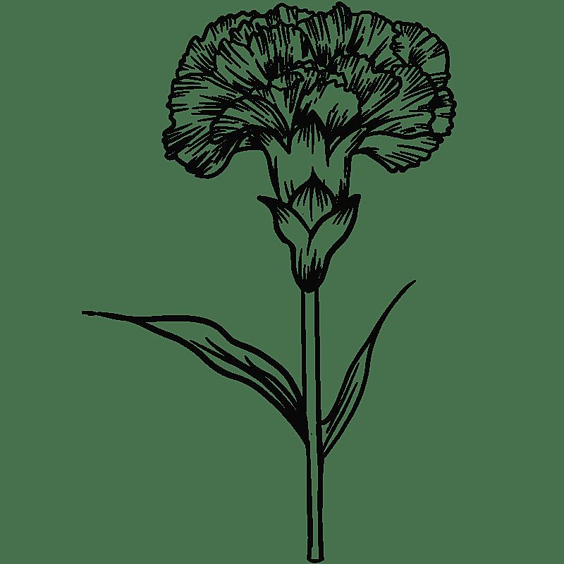 手绘-勾线花朵植物元素贴纸-康乃馨