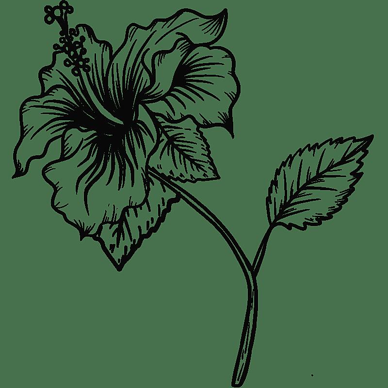 手绘-勾线花朵植物元素贴纸-扶桑花