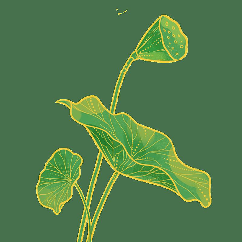 中国风-国潮植物元素贴纸-荷叶